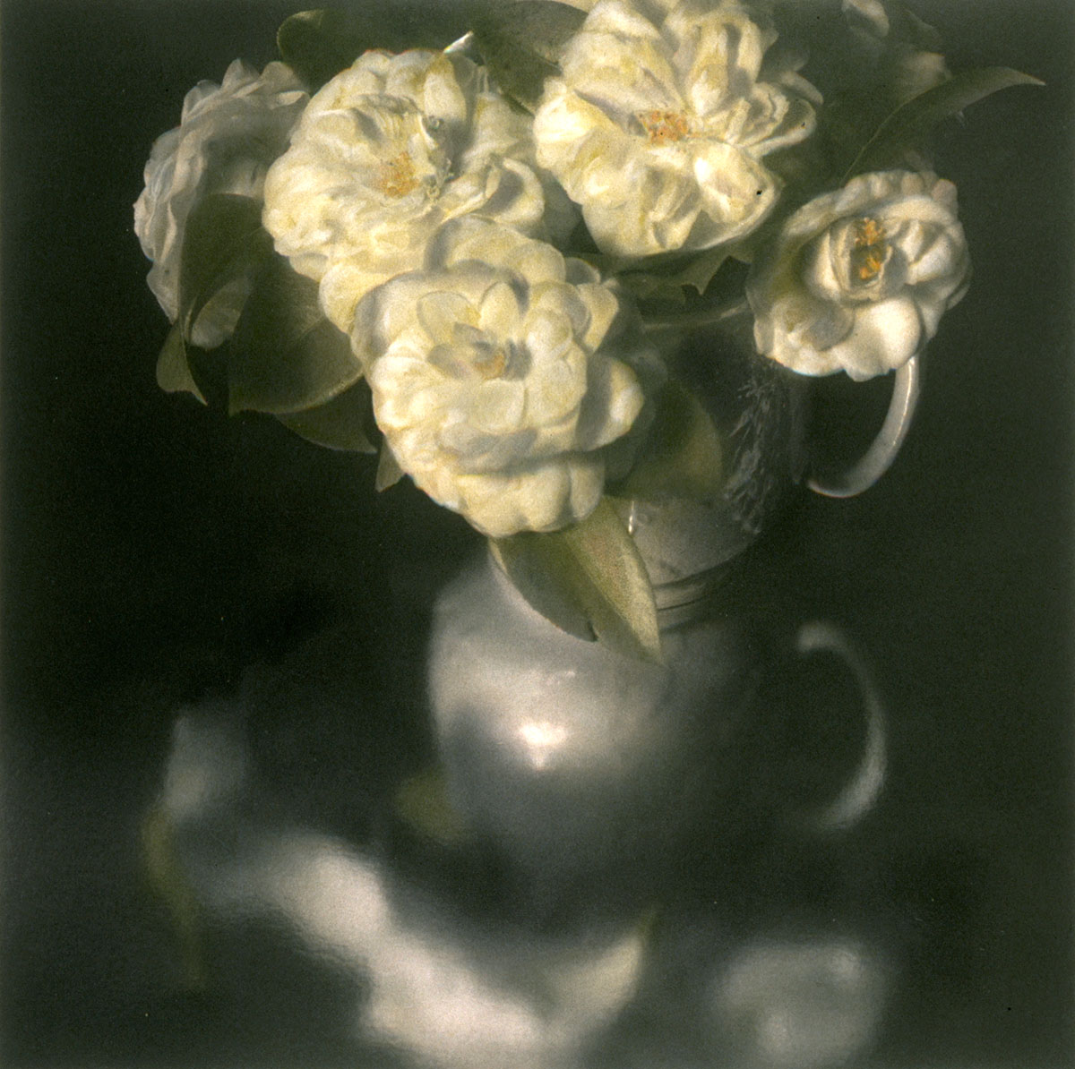 White Pitcher of Camellias