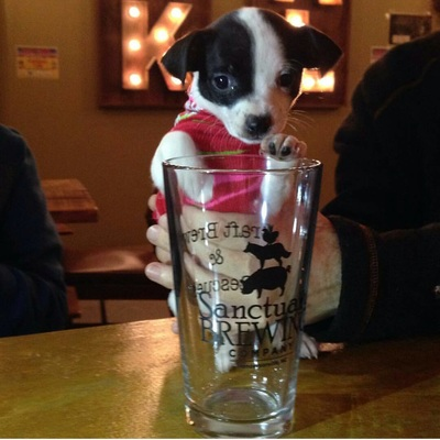 Puppy with Beer.jpg
