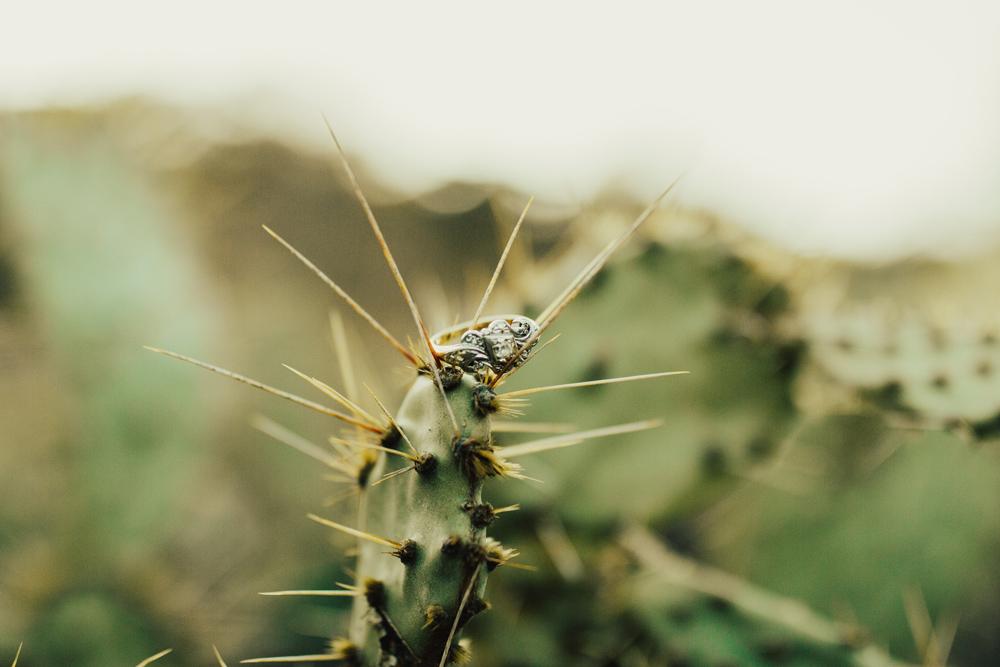 engagement-ring-cactus.jpg