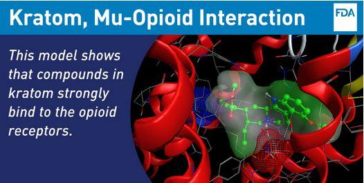 Kratom-Mu-Opioid-Binding.jpg