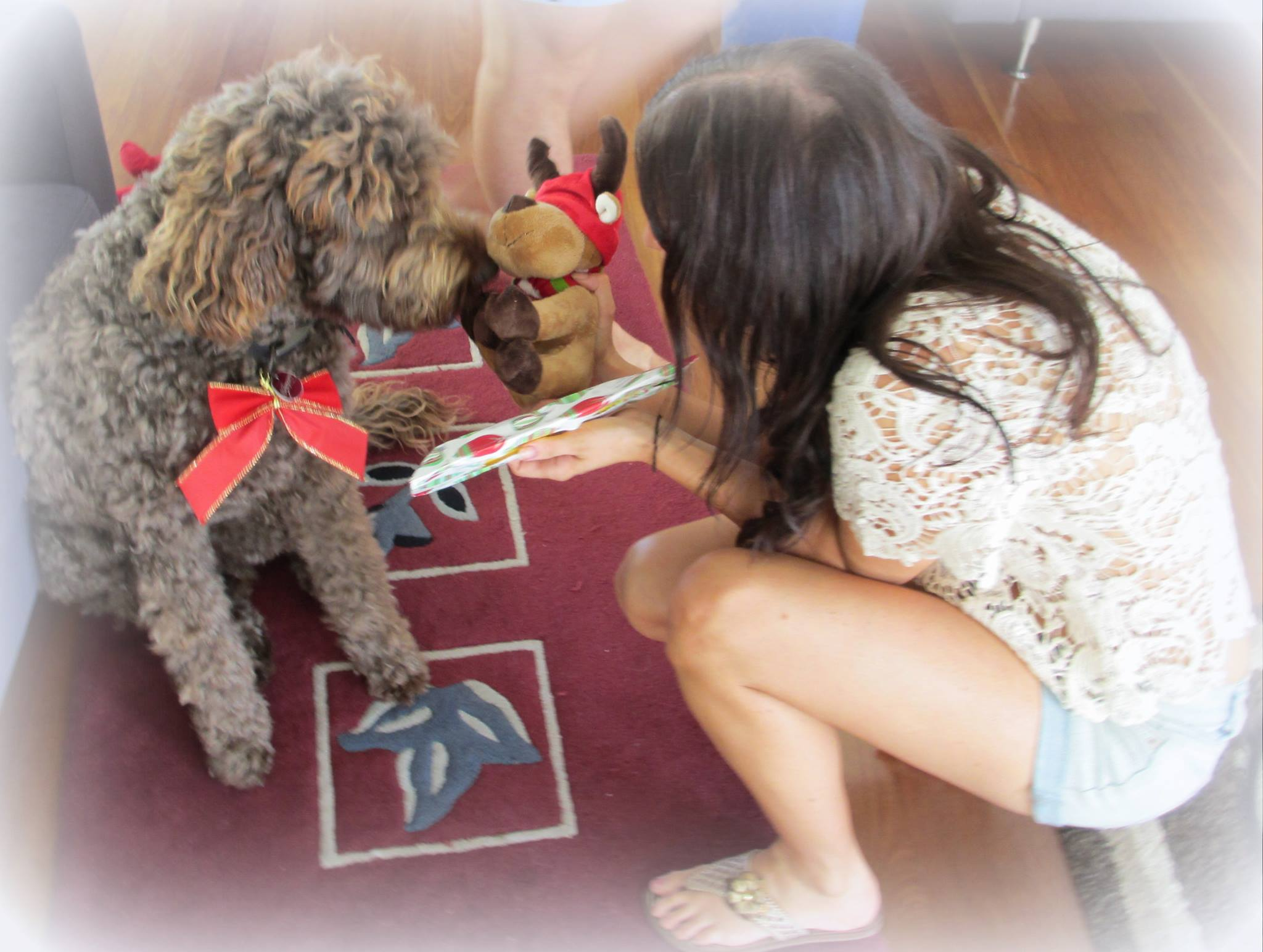 A photo of my sister giving our dog, Cooper, a present in 2011 - the last Christmas we shared together.