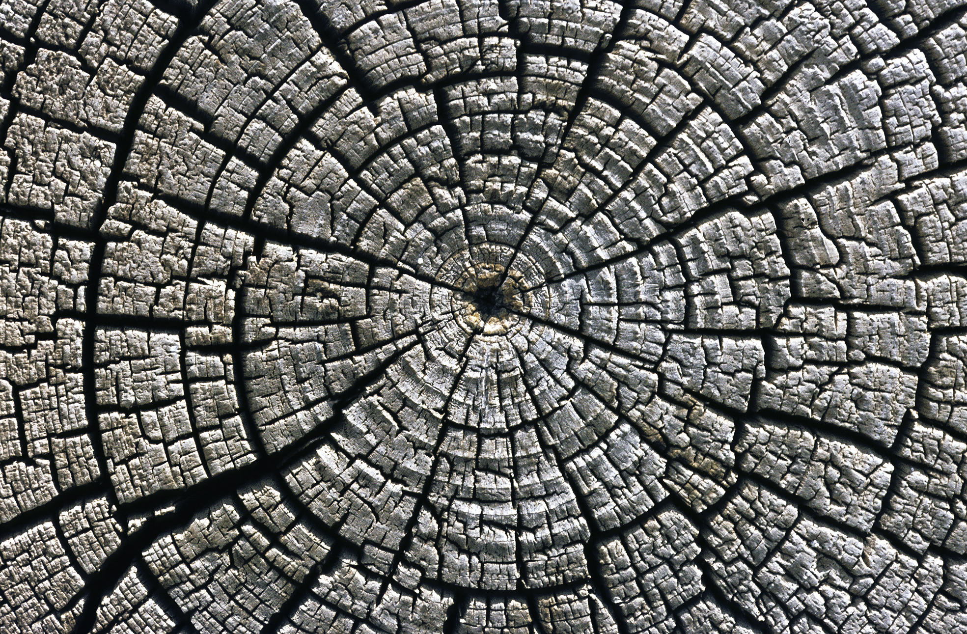 CONCEPT IMAGE_tree growth rings.jpg