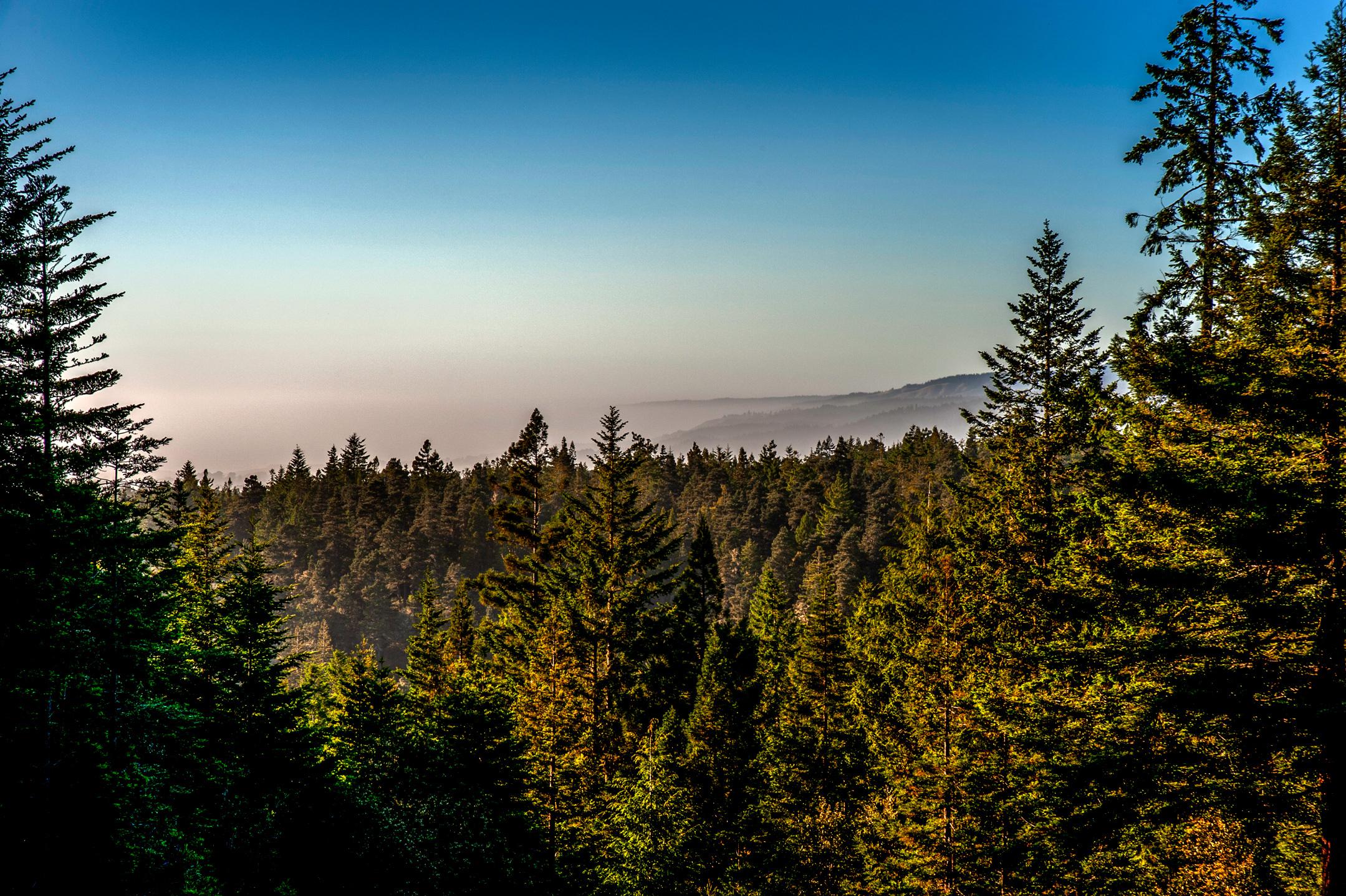 BPF-Pt-A---Forest-(0).jpg