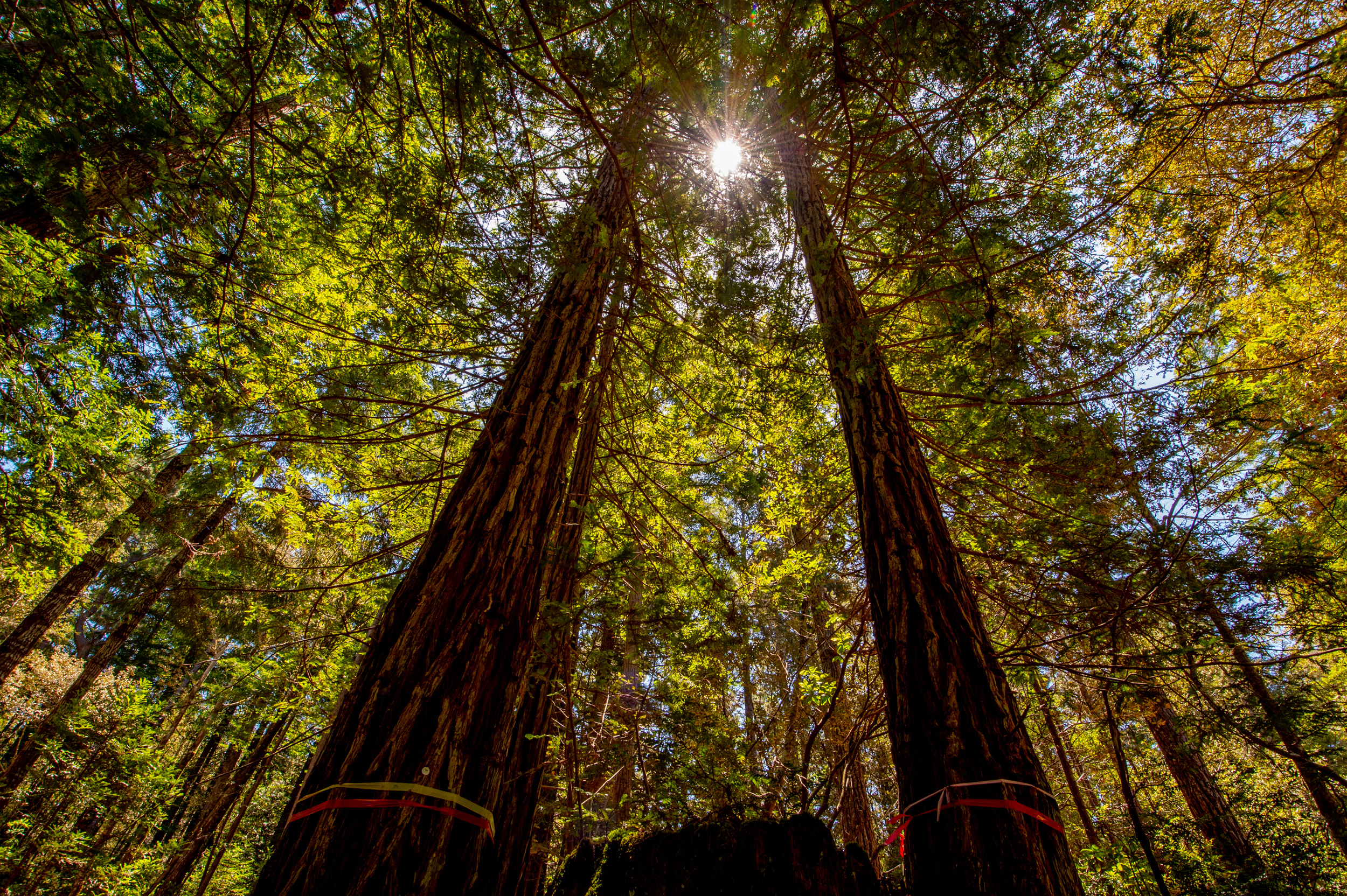 BPF-Pt-A---Forest-(4).jpg