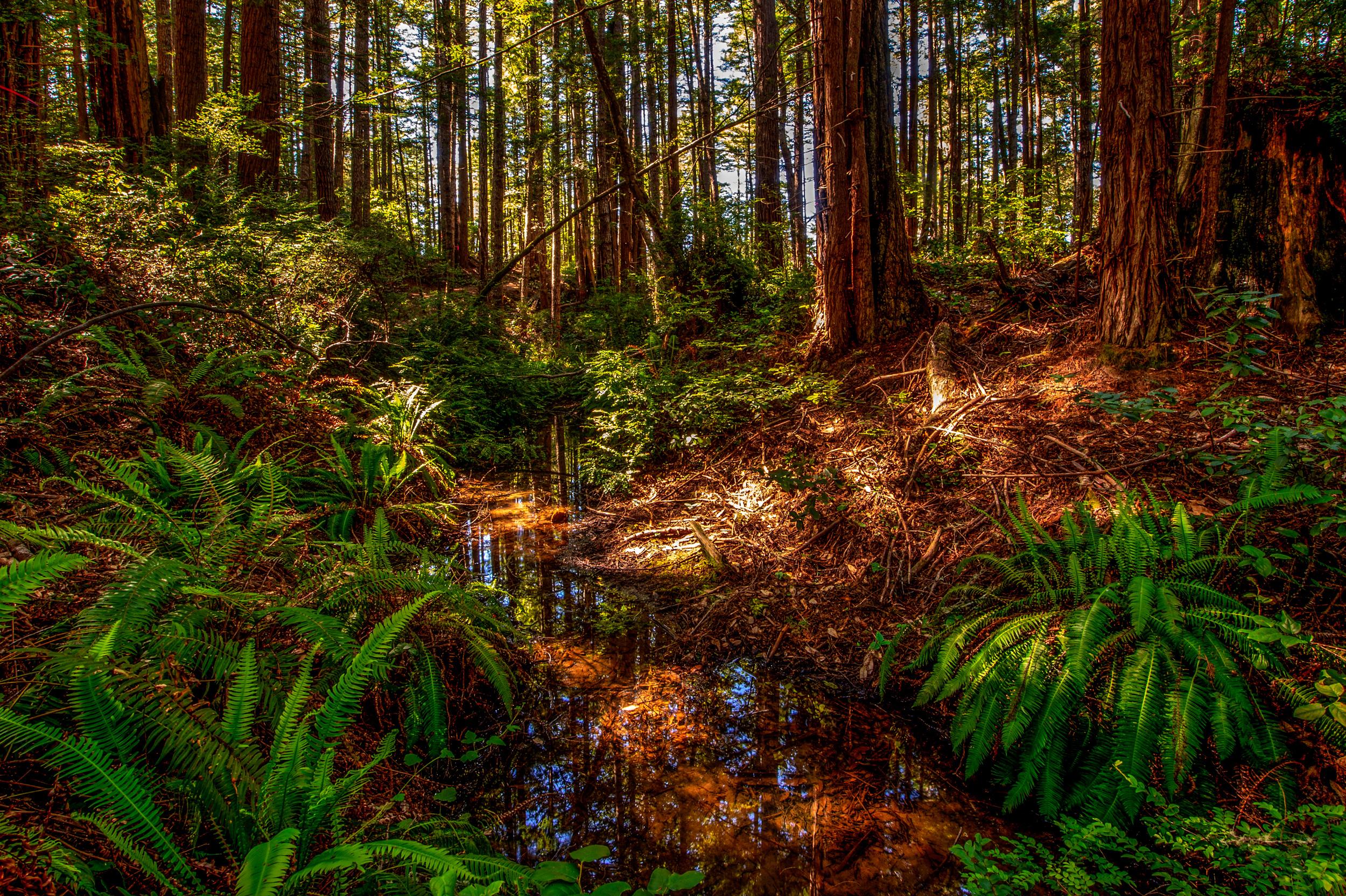 BPF-Pt-A---Forest-Creek.jpg