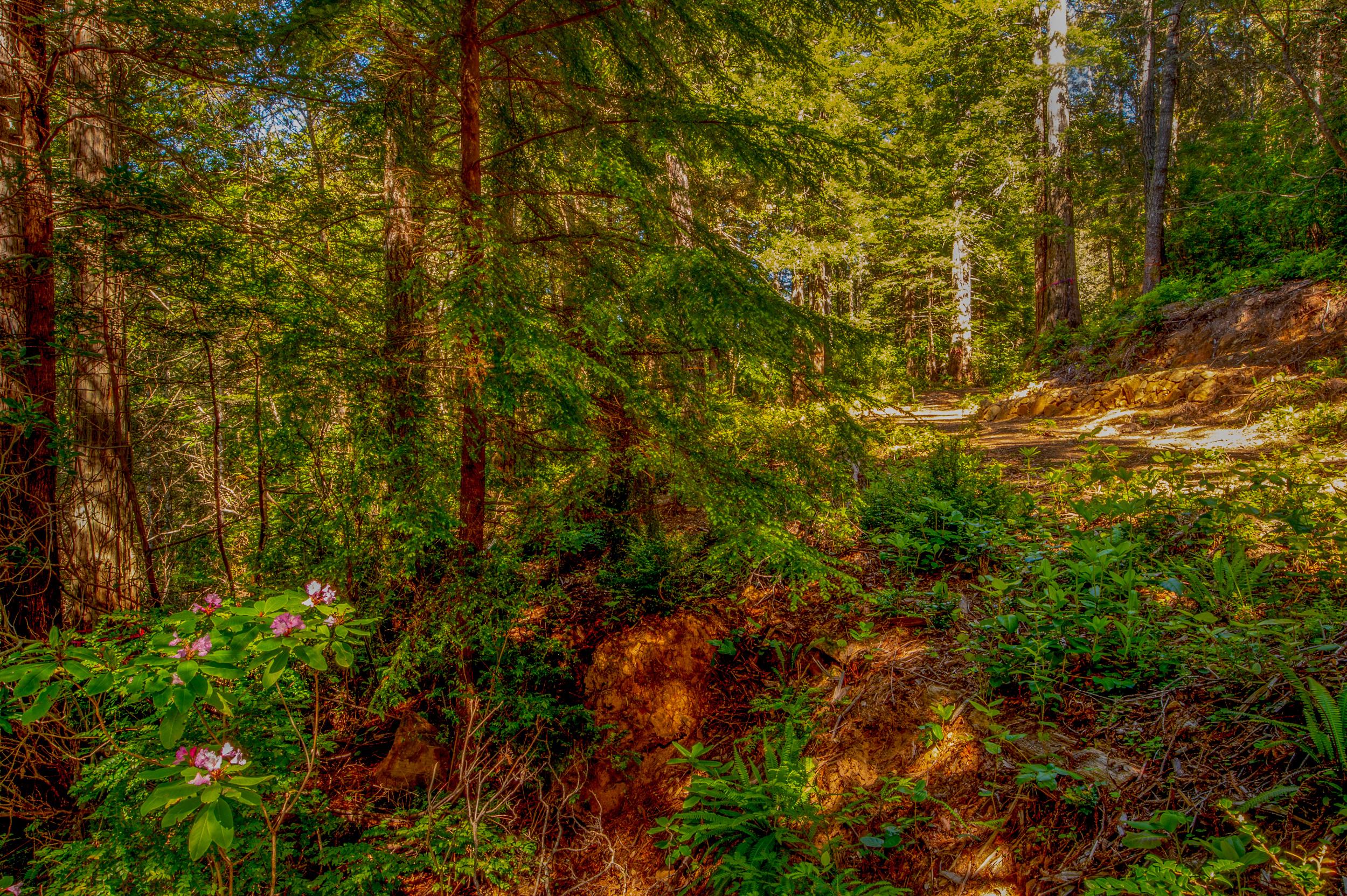 BPF-Pt-A---Forest-Path-2.jpg