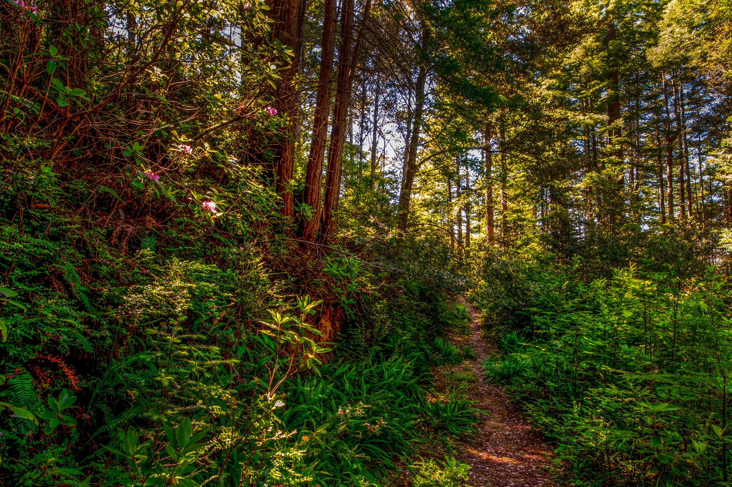 BPF-Pt-A---Forest-Path-3.jpg