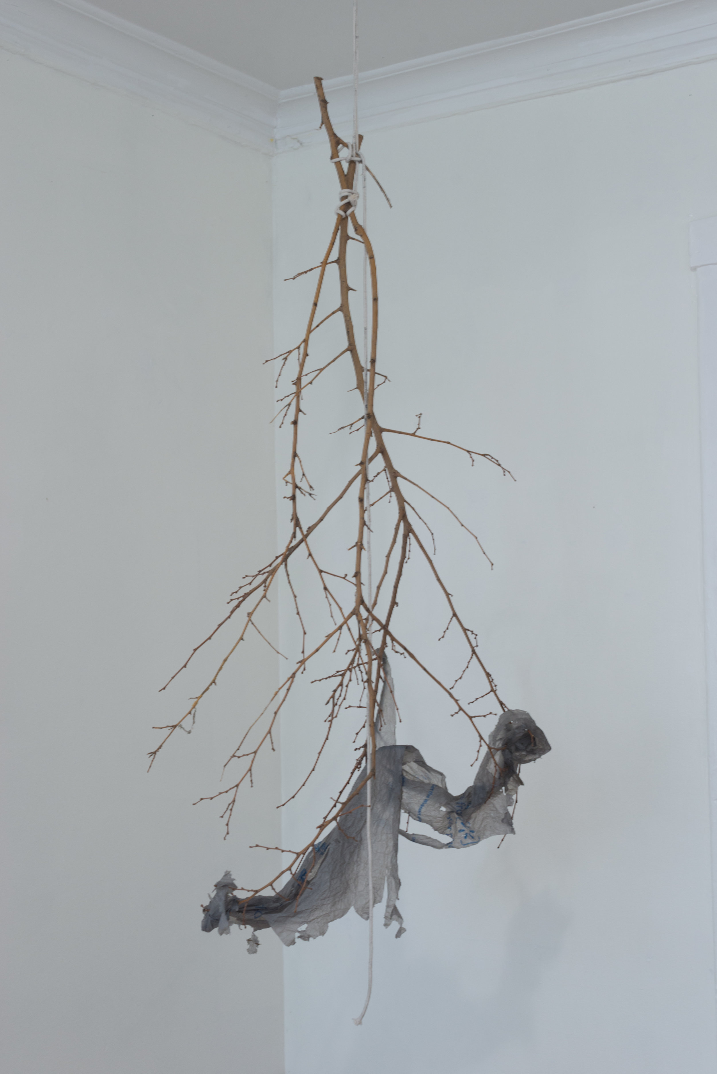 Will Krauland,  two branches and a plastic bag that have never felt the ground below them , 2018, Cotton twine, wood, plastic bag