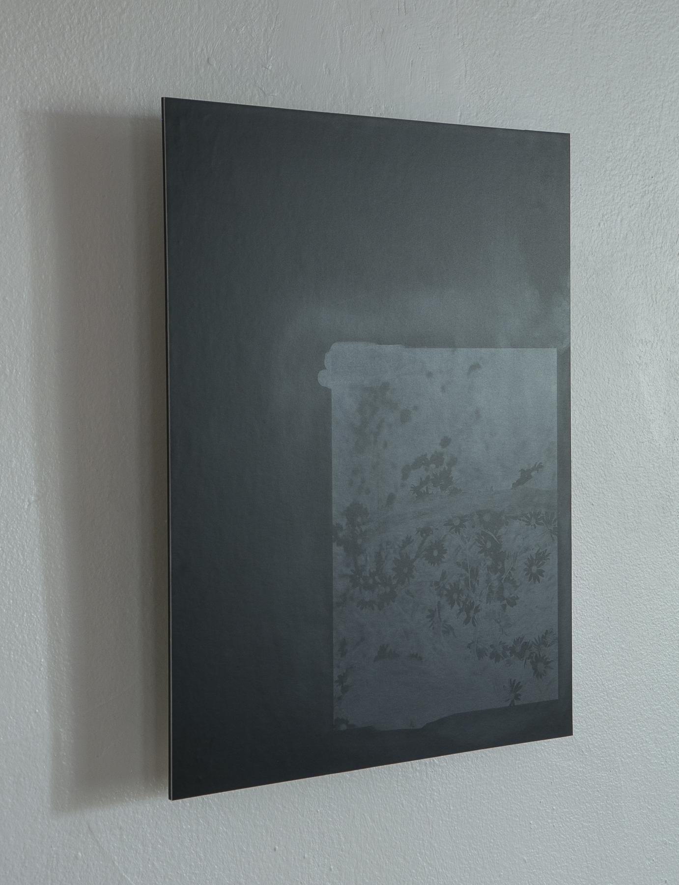 Daniel Hojnacki,  The falling of raking light upon a bed of flowers,  Silver gelatin lumen print on dibond, 2019