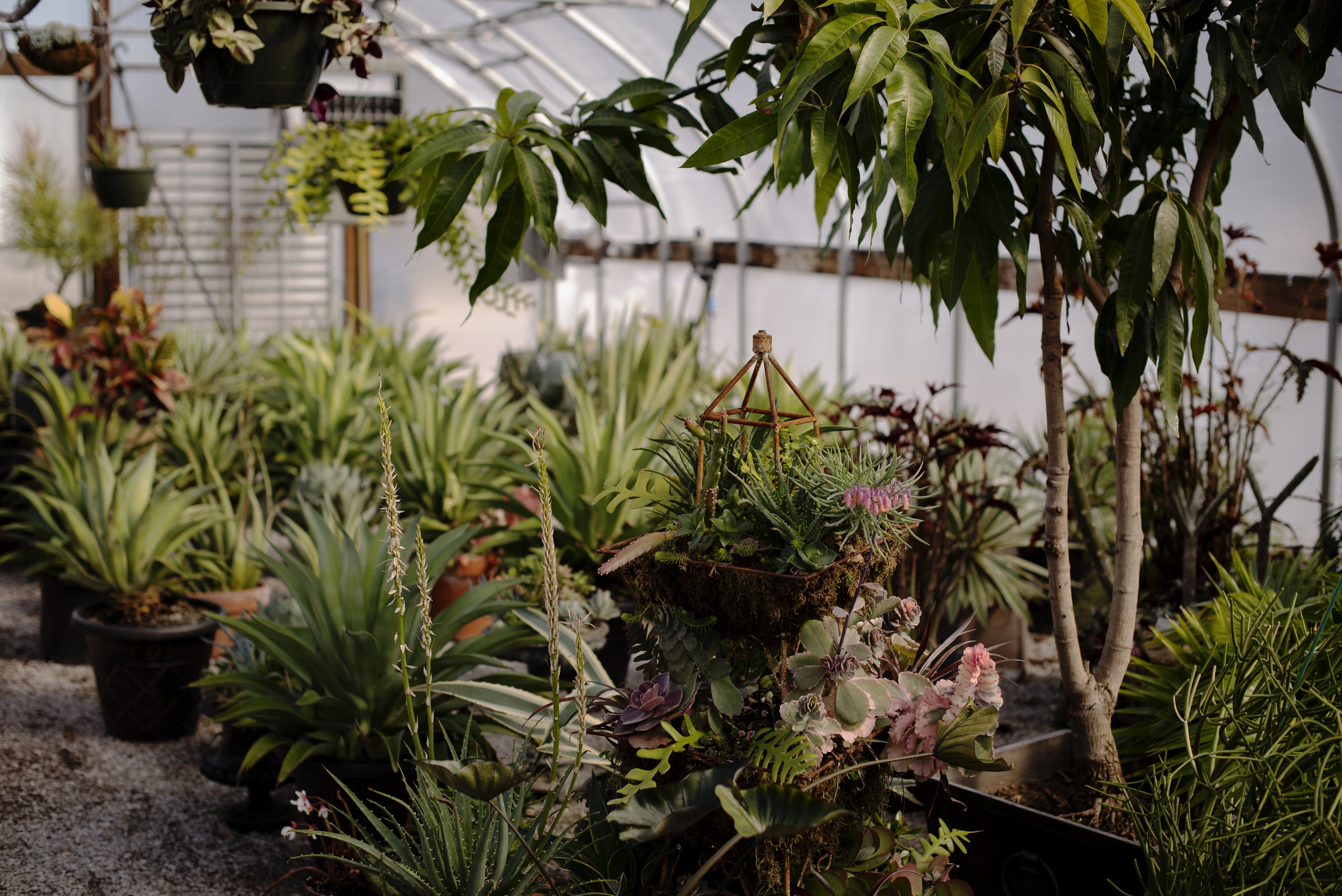 The two greenhouses housed on the Baker Arboretum land are maintained by horticulturalists Rickman Freeman and Dennis Williams. Both Freeman and Williams have maintained the arboretum property for five years.