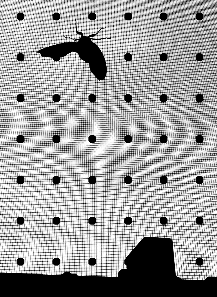 YYOO-Cicada+Sky+BW+02.jpg