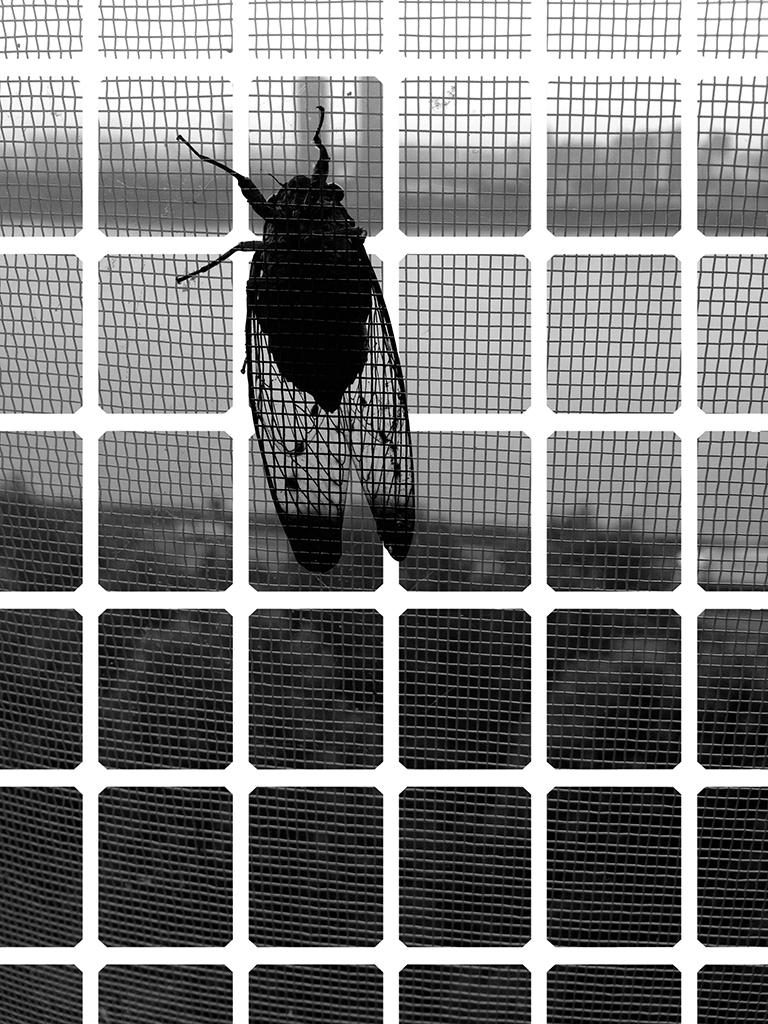 YYOO-Cicada+Tree+BW+02.jpg