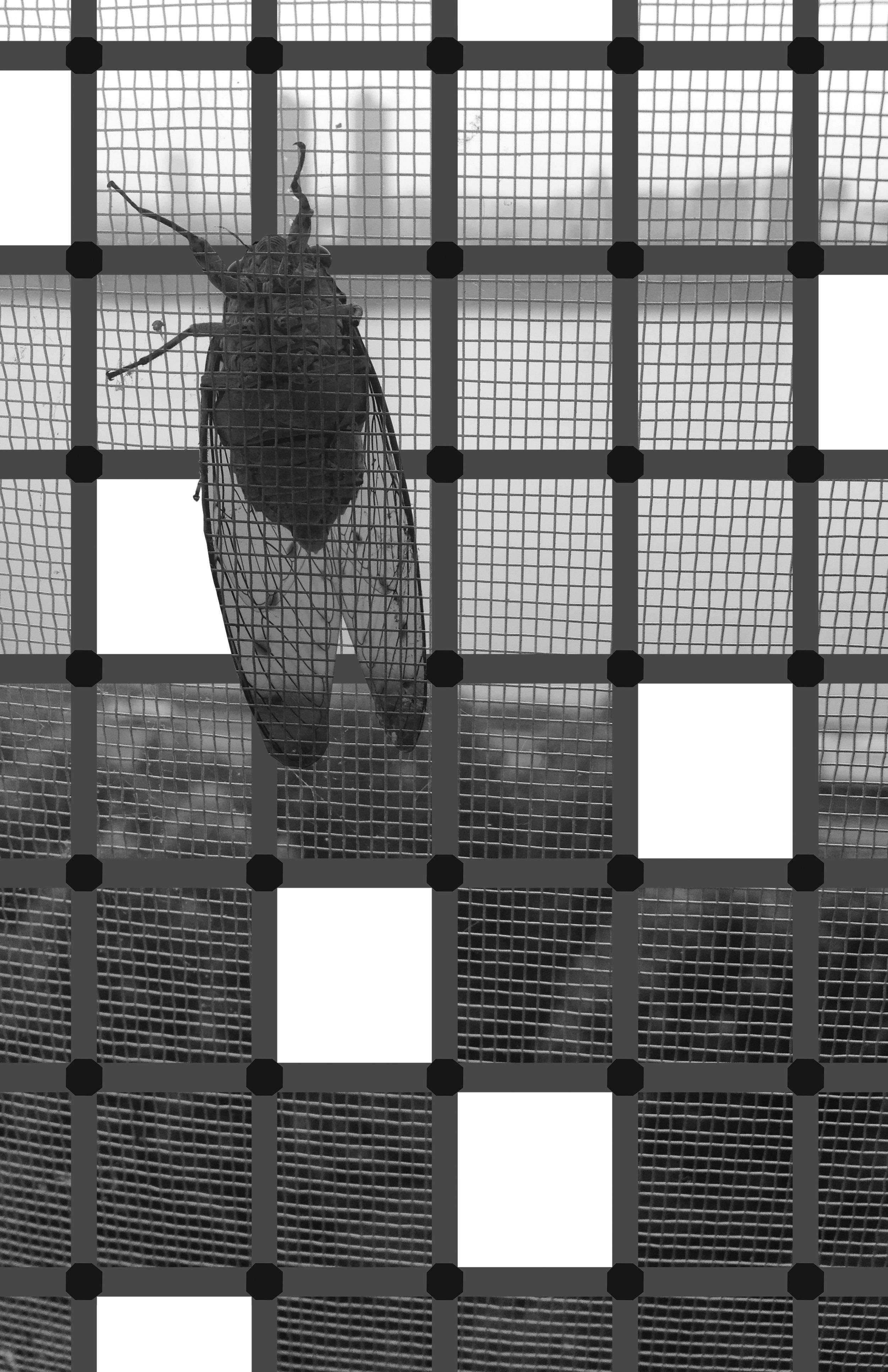 Cicada Tree 11x17.jpg