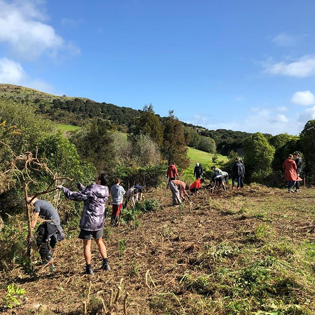 Saturday morning impact - restoring the Rangihoua Wetland on Waiheke. We planted over 250 native trees and cleared the way for further growth! Big shout out to Waiheke Resources Trust for an epic day 🌱