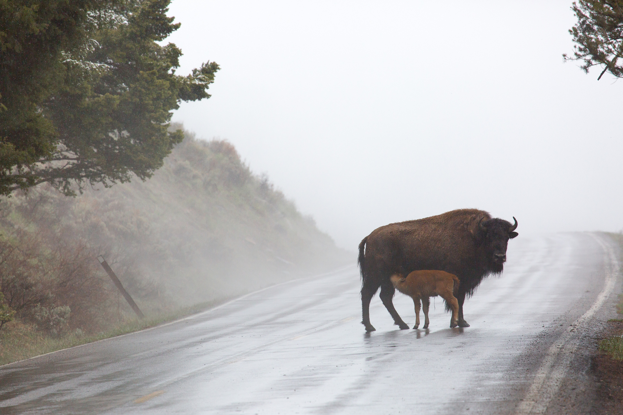 Source:  Yellowstone National Park