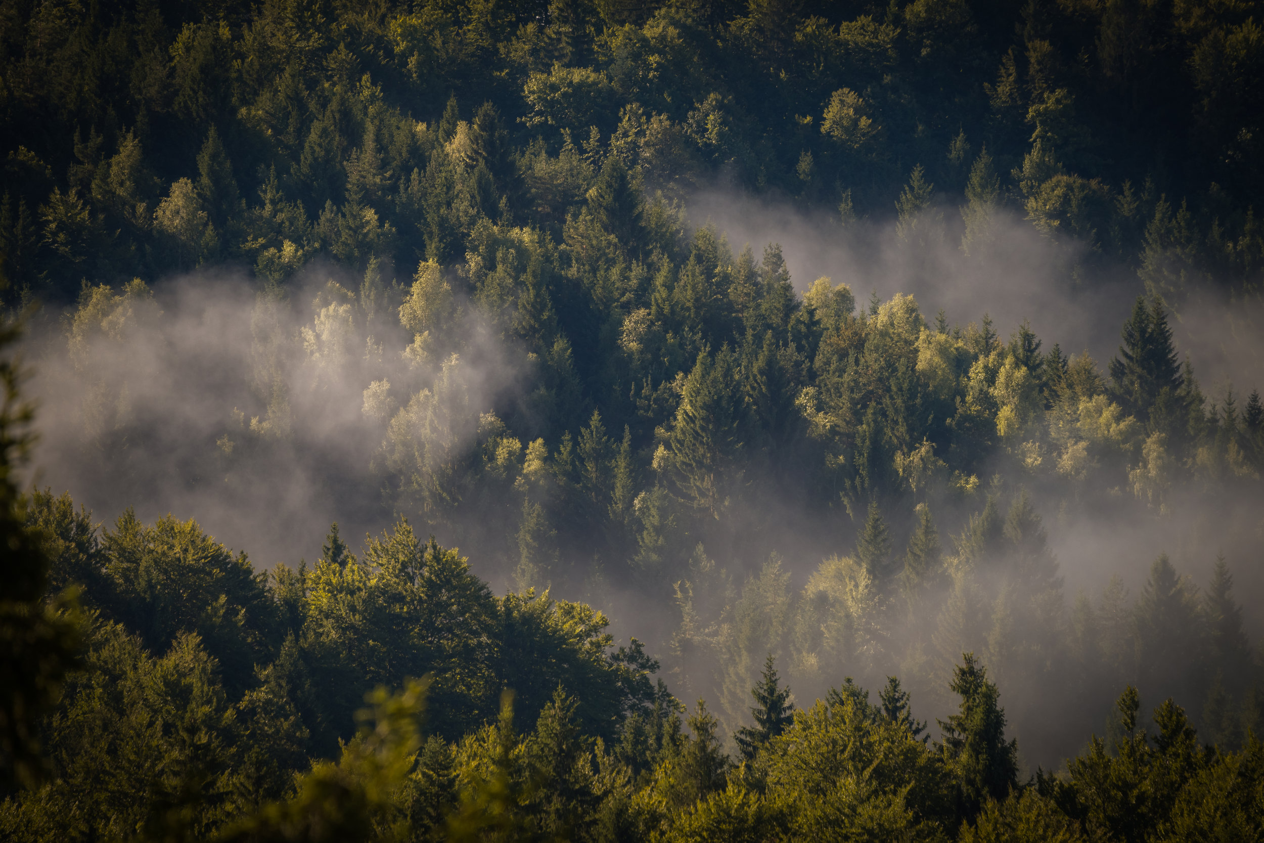 fog-cover-the-forest-PYZCEEV.JPG
