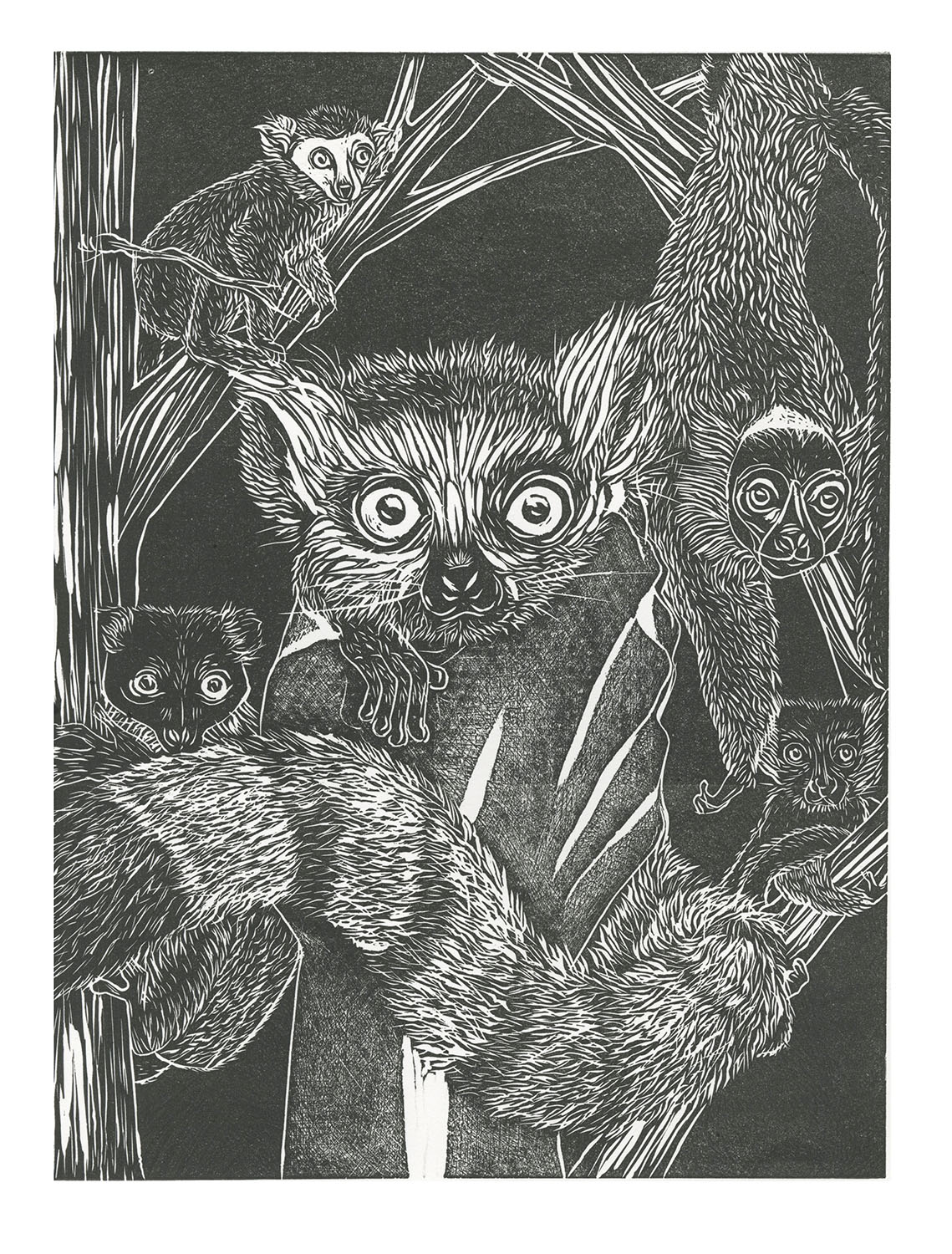 Ghosts  by Yeisy Rodriguez is a linocut that features the five species of lemurs most commonly sold as pets. Ninety-one percent of 103 lemur species face extinction as a result of pet trade and climate change.