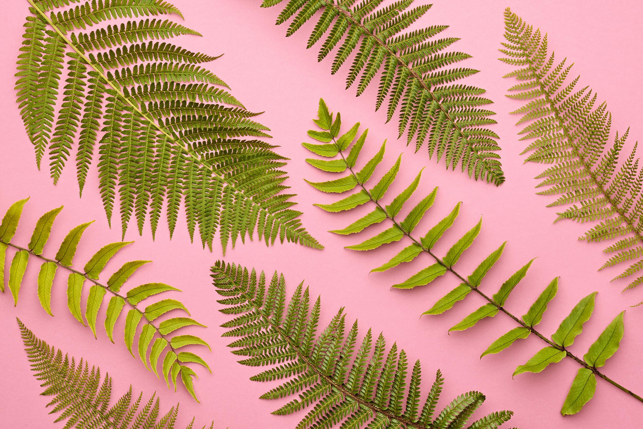 fern-leaf-PKLUUF6_1.jpg