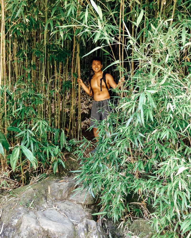 Bamboo Forest Maui Hawaii