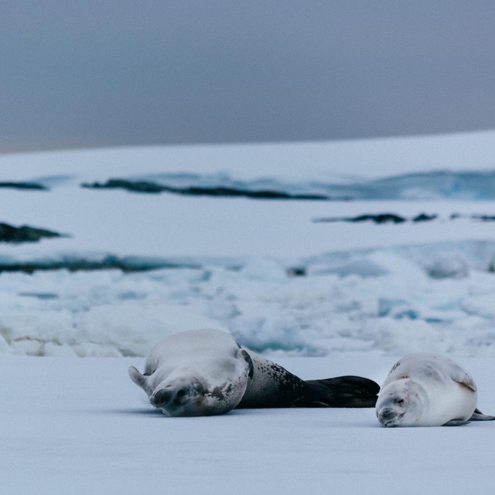 antarcticablog-35.jpg