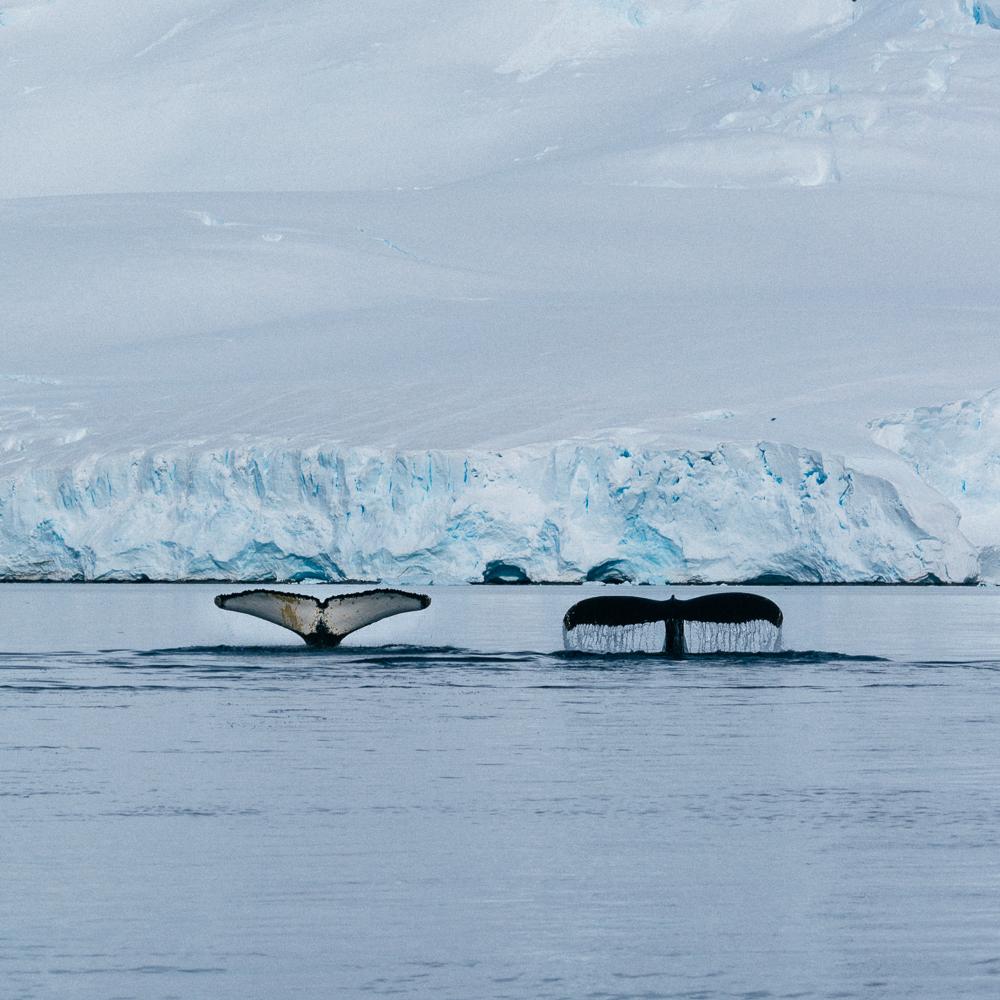antarcticablog-37.jpg