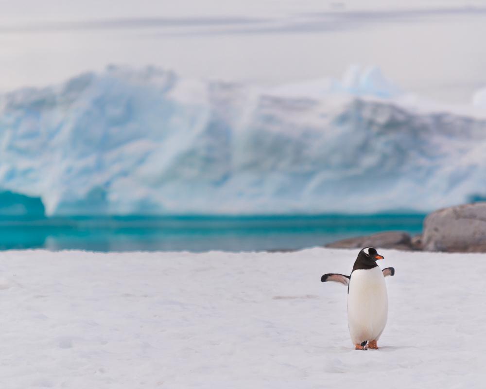 antarcticablog-39.jpg