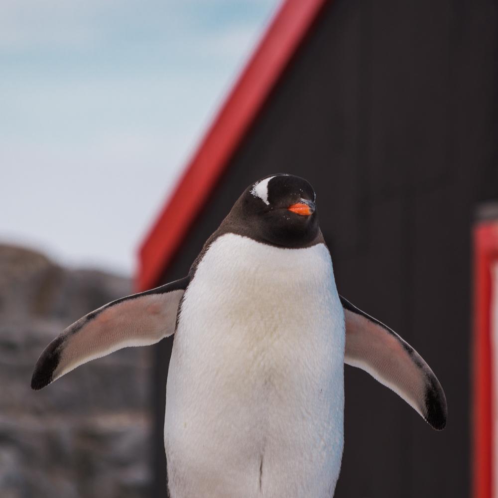 antarcticablog-41.jpg