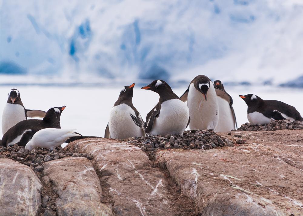 antarcticablog-42.jpg