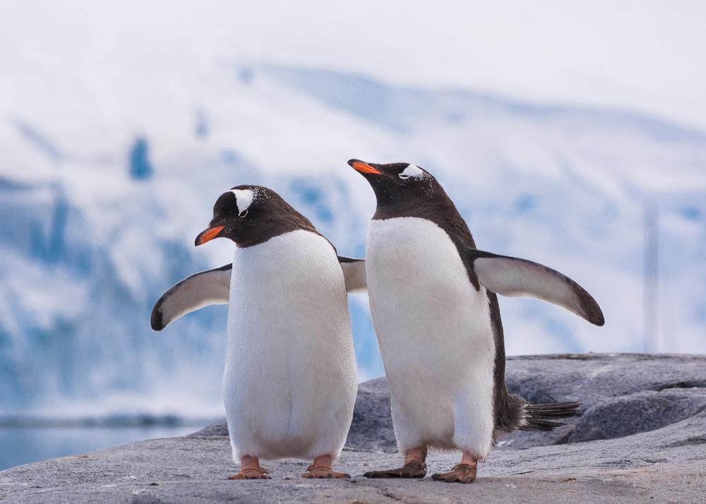 antarcticablog-43.jpg