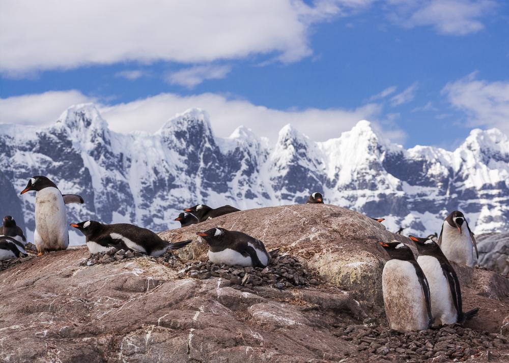 antarcticablog-44.jpg