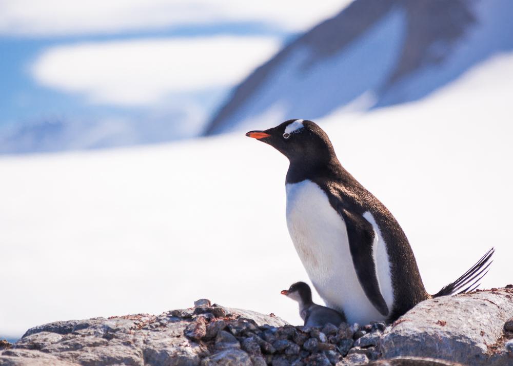 antarcticablog-46.jpg