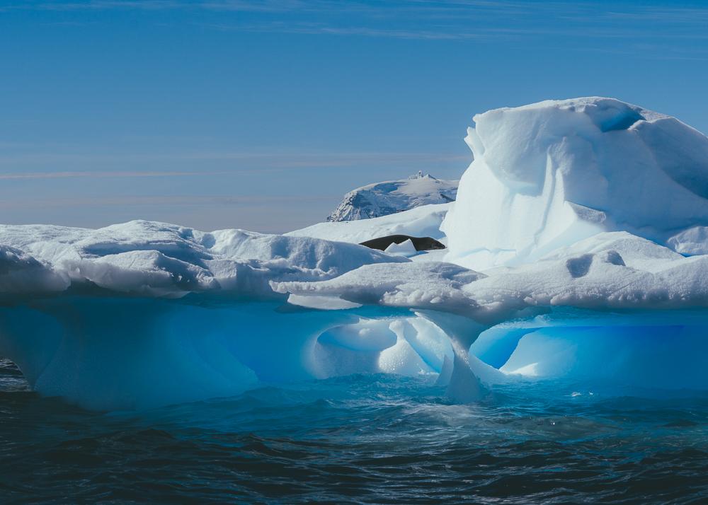 antarcticablog-63.jpg