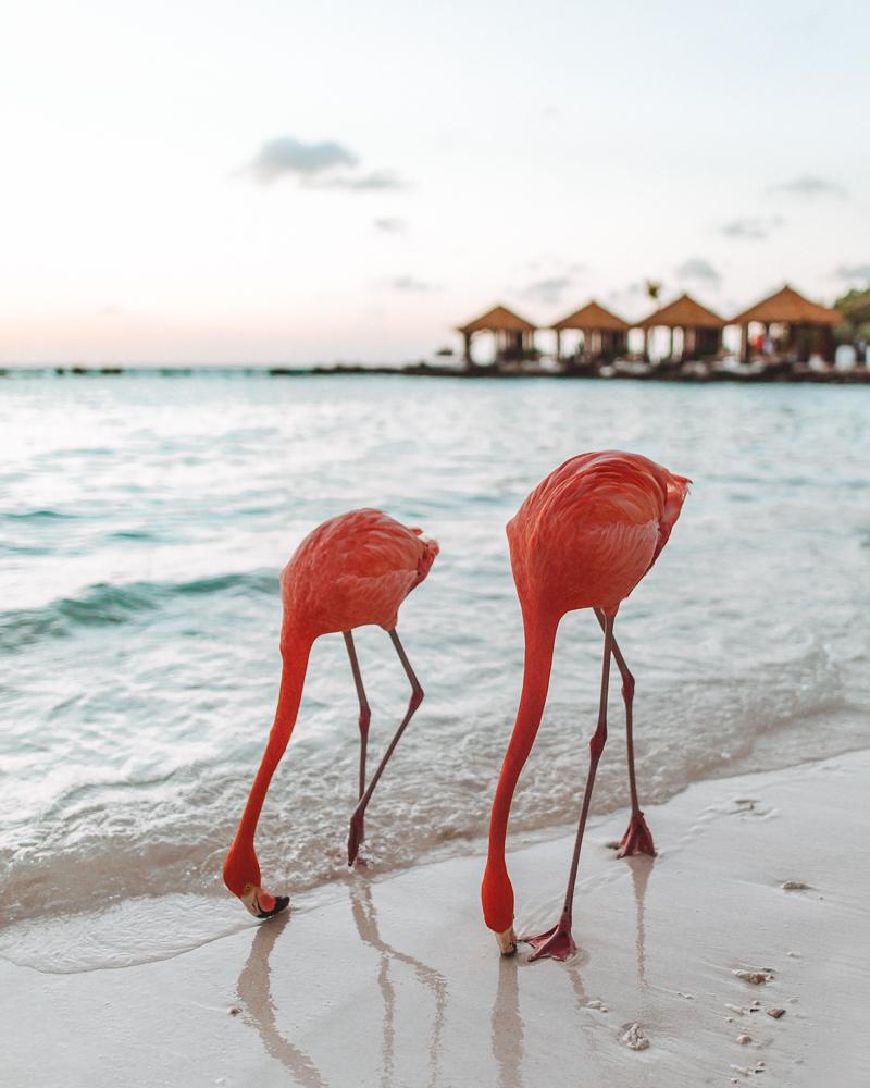 pink-flamingos-1.jpg