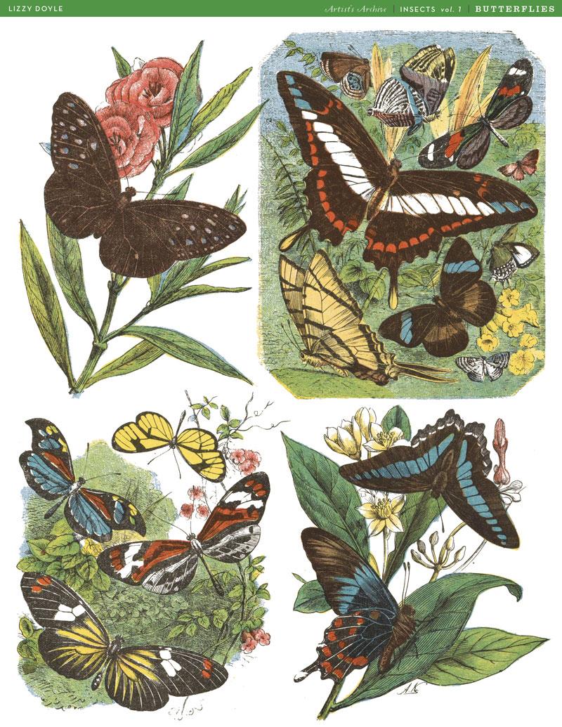 Butterflies_ArtistsArchive25.jpg