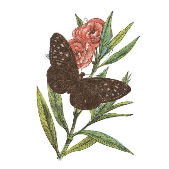 butterfly_AA.jpg
