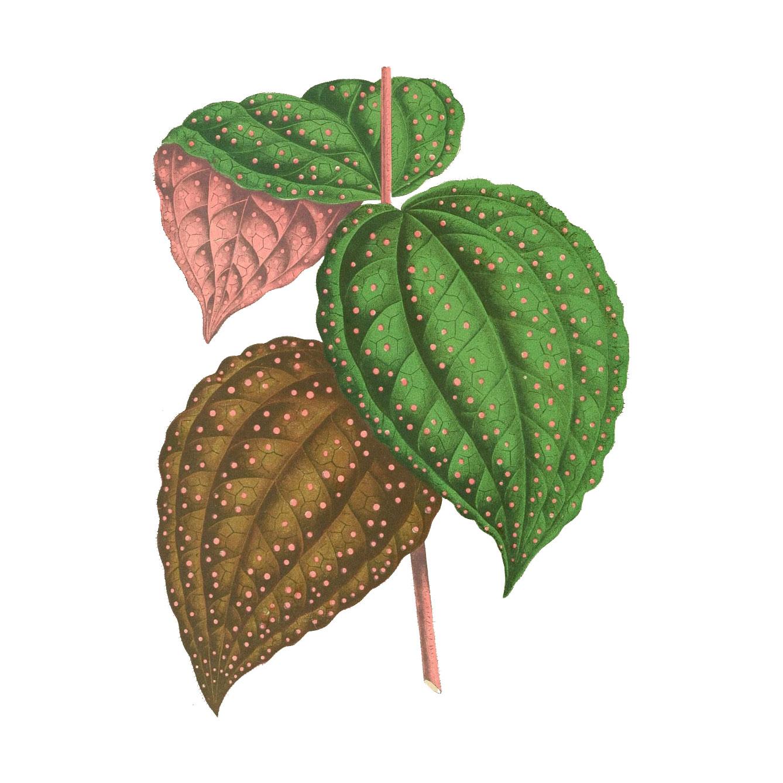 leaf_AA.jpg