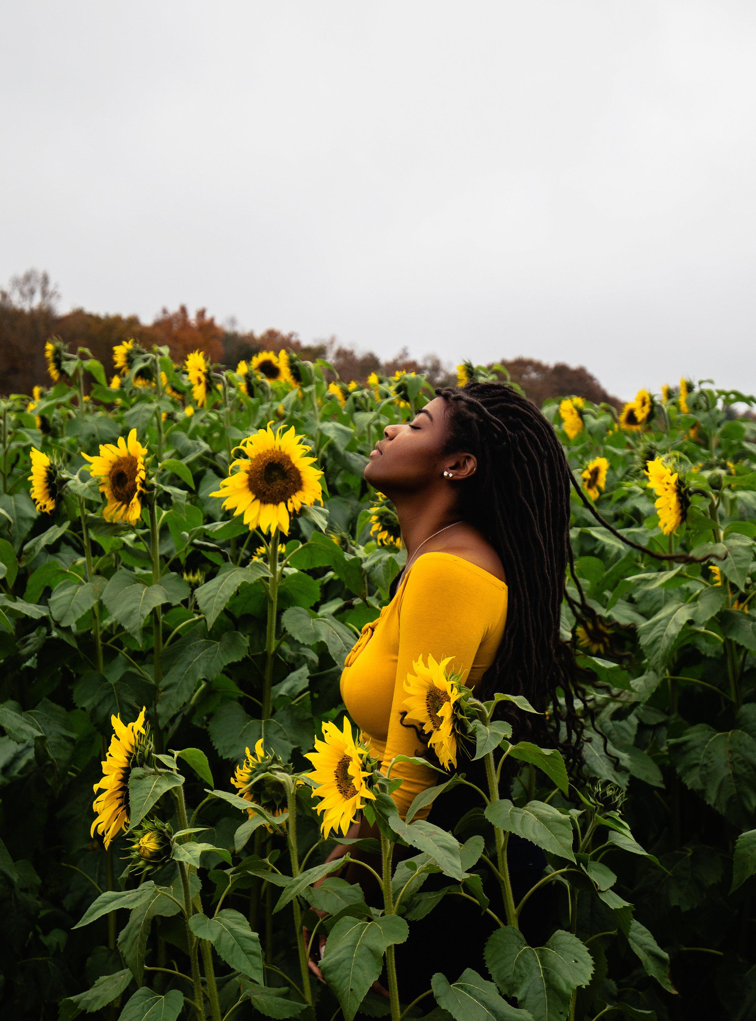 Sunflower-Field-85.jpg