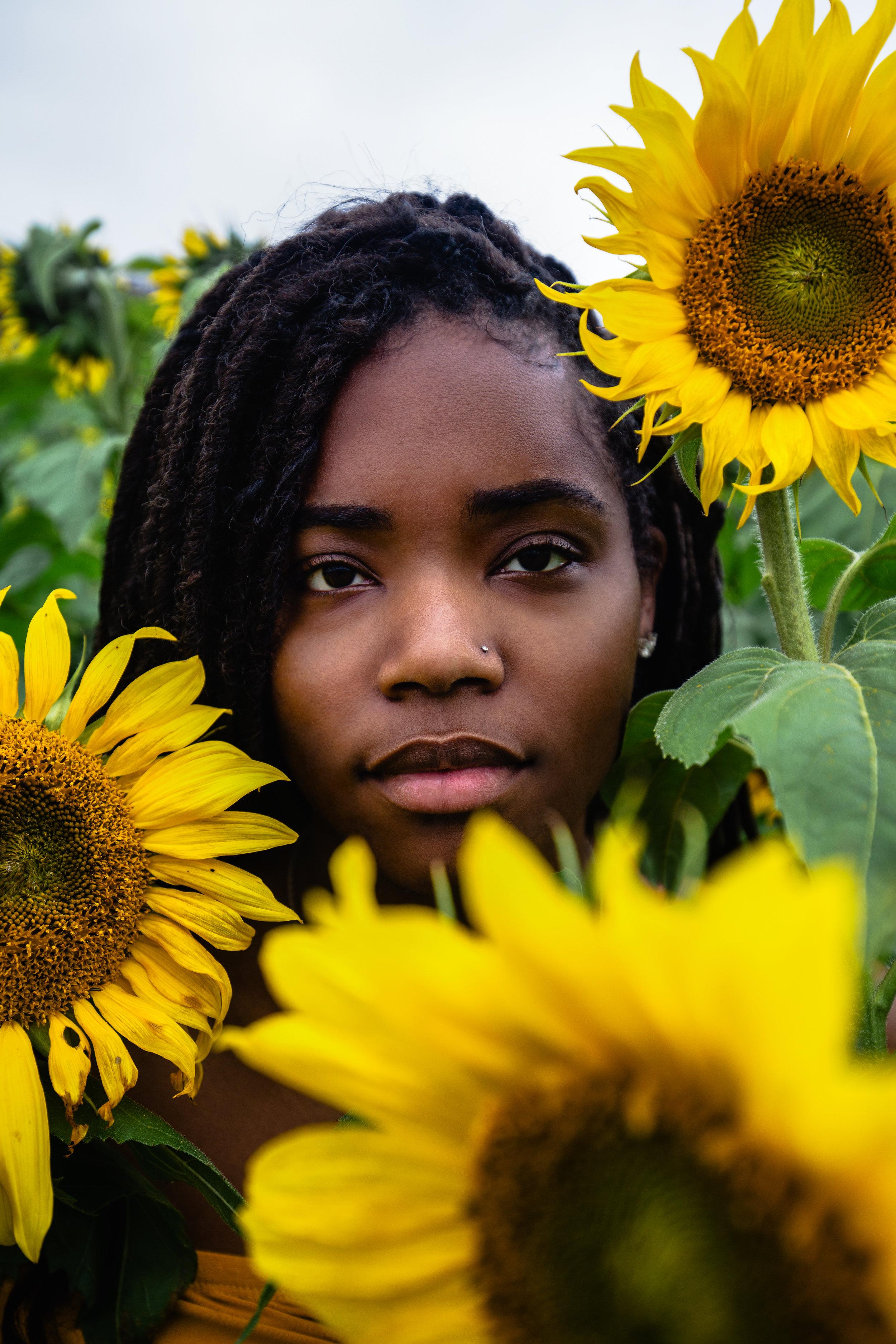 Sunflower-Field-150.jpg