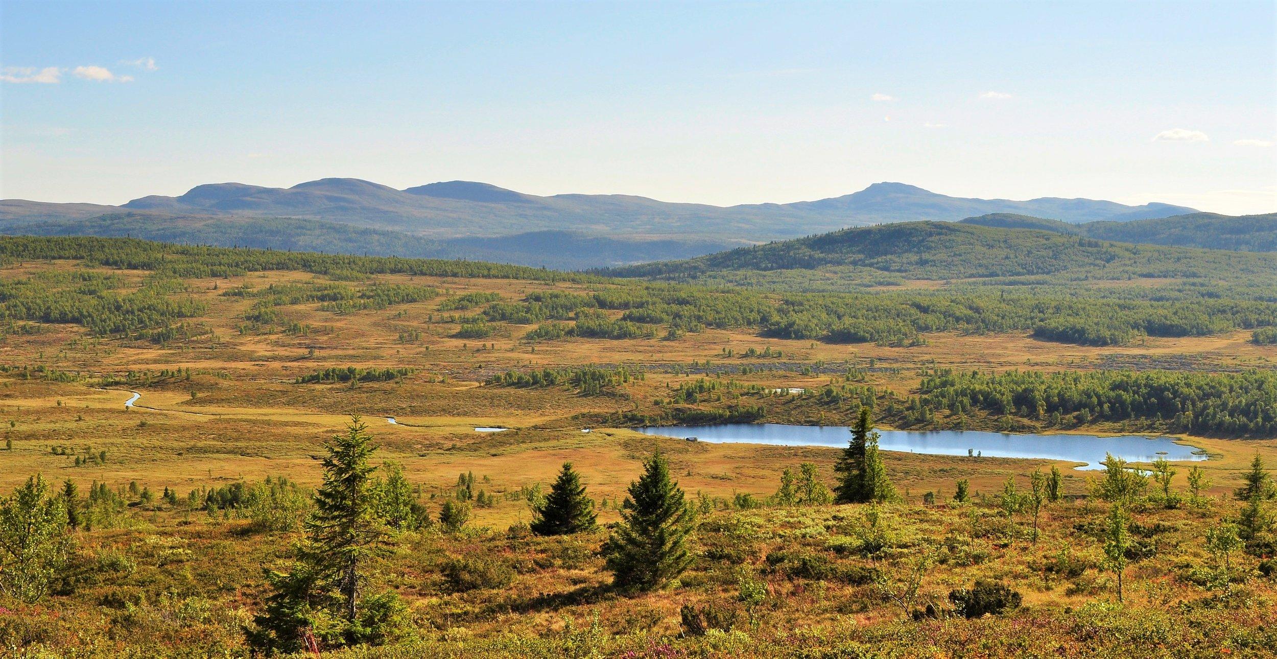 Omundtjønnet ligger i Grytlia jaktfelt. Foto: Ole Johan Elvestad