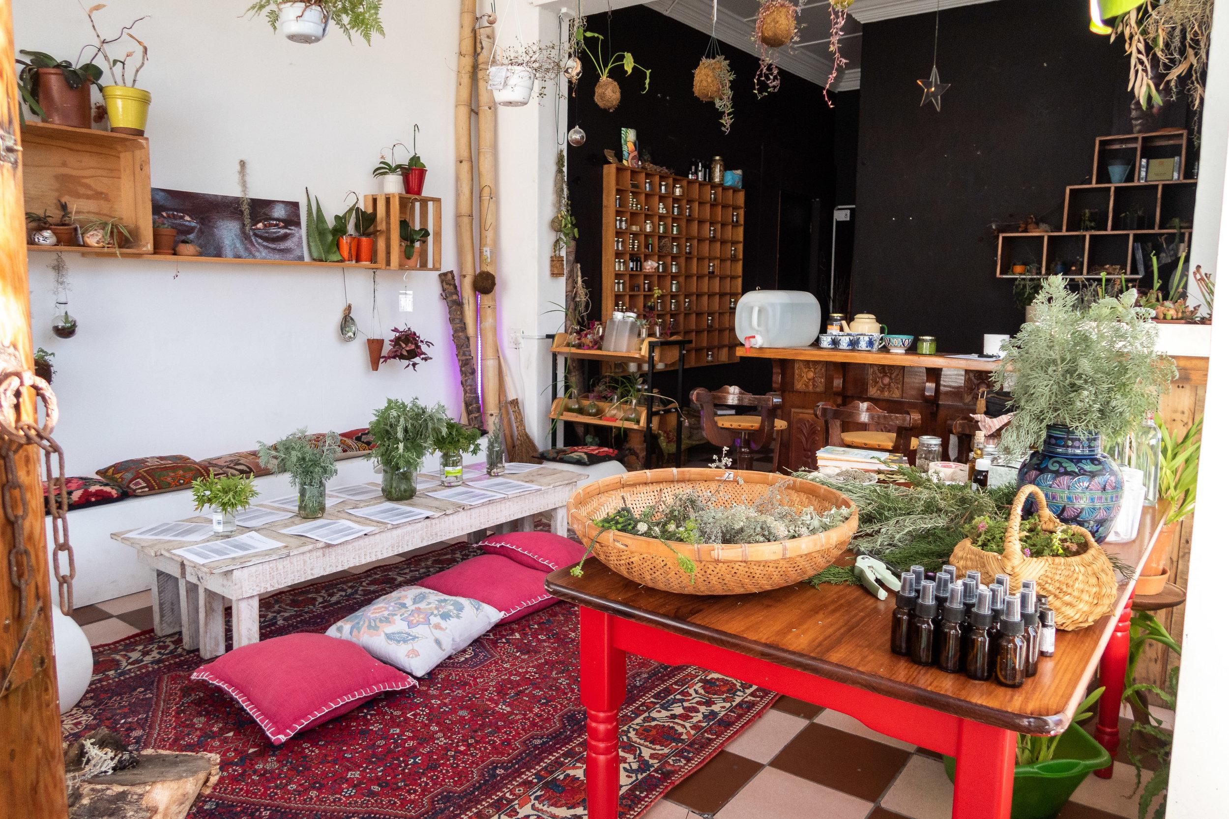 wild-love-herbalism-workshop-women-cape-town-south-africa-rewilding-003.jpg