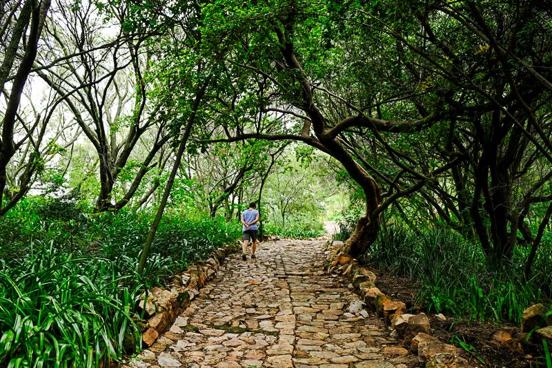 Die Wege scheinen durch einen Märchenwald zu führen.