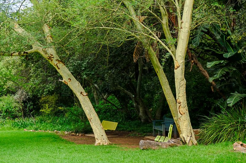 Jetzt gibt es wieder schattige Plätzchen unter Fever Trees.