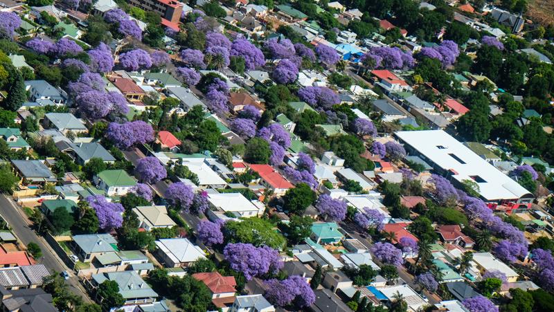 Straßenzüge voller Jacarandas im Süden von Johannesburg