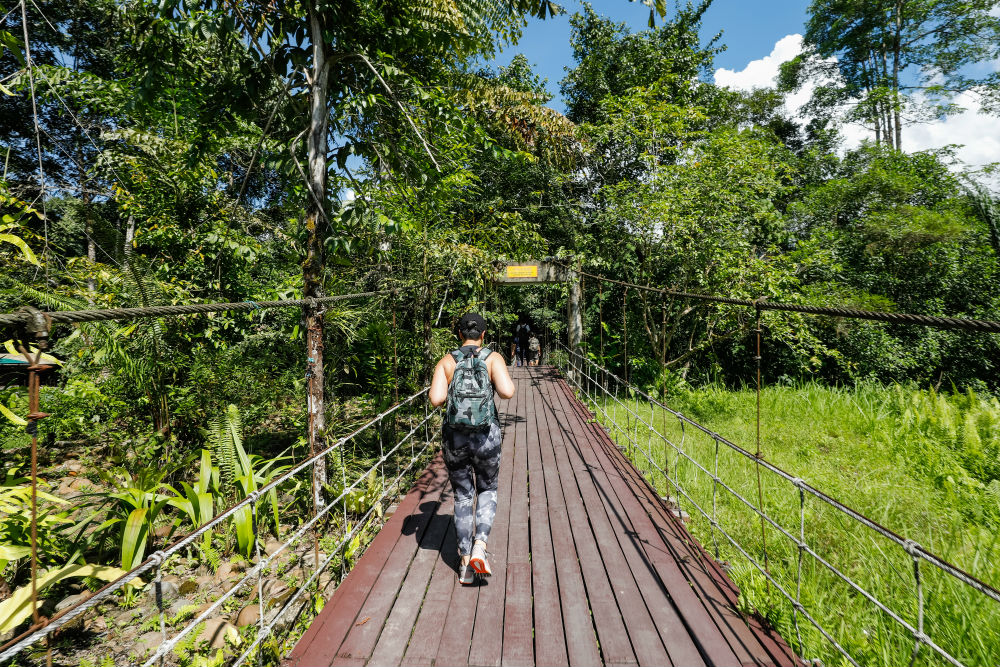 The highlight of the trip was an overnight stay in Mulu for the show caves at Gunung Mulu National Park. We walked a lot in those two days.