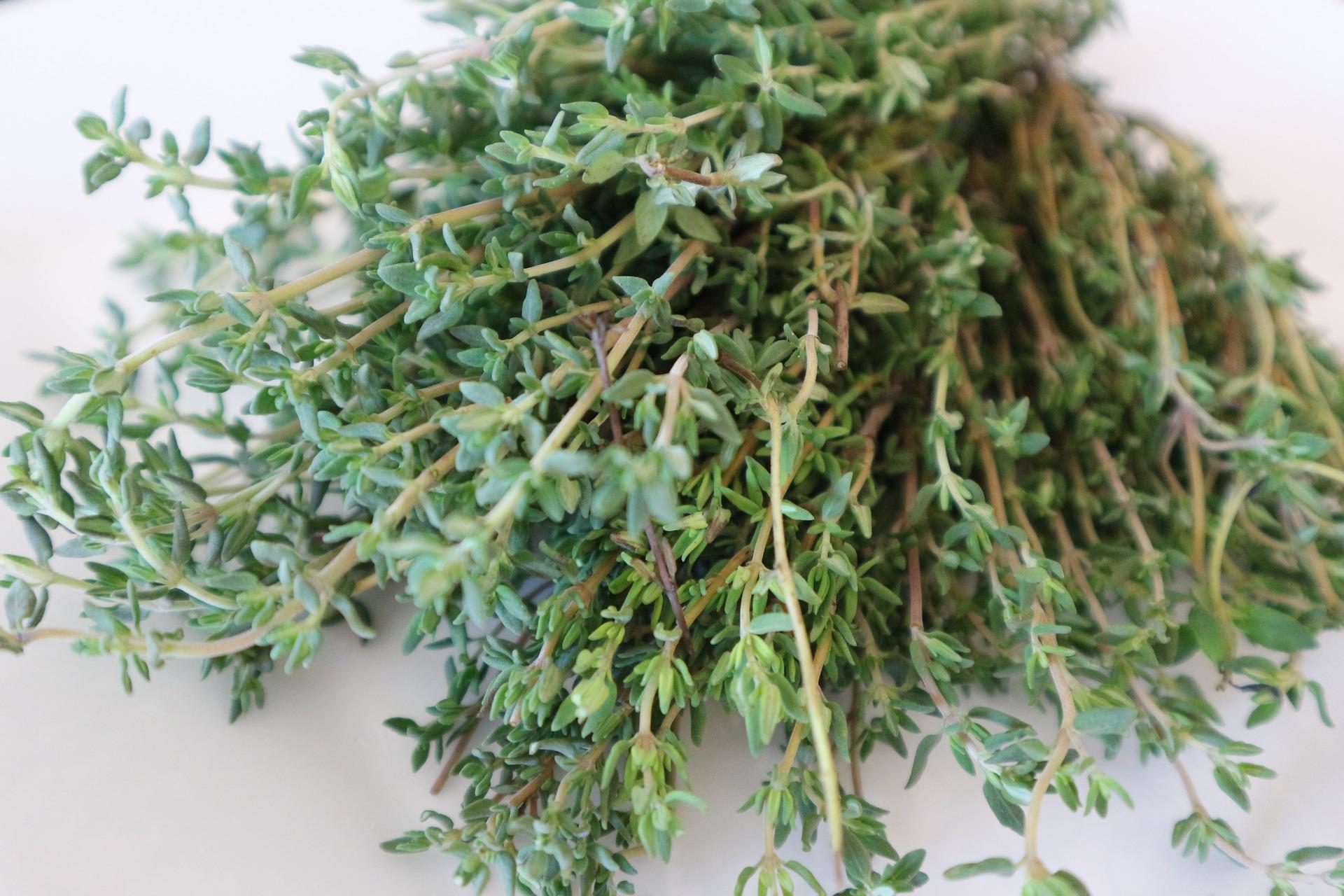 Thyme - The Mediterranean Lifestyle