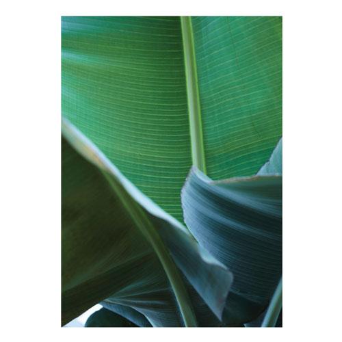 Botanical Poster - by Nicoline Olsen - € 20 - Appeal shop