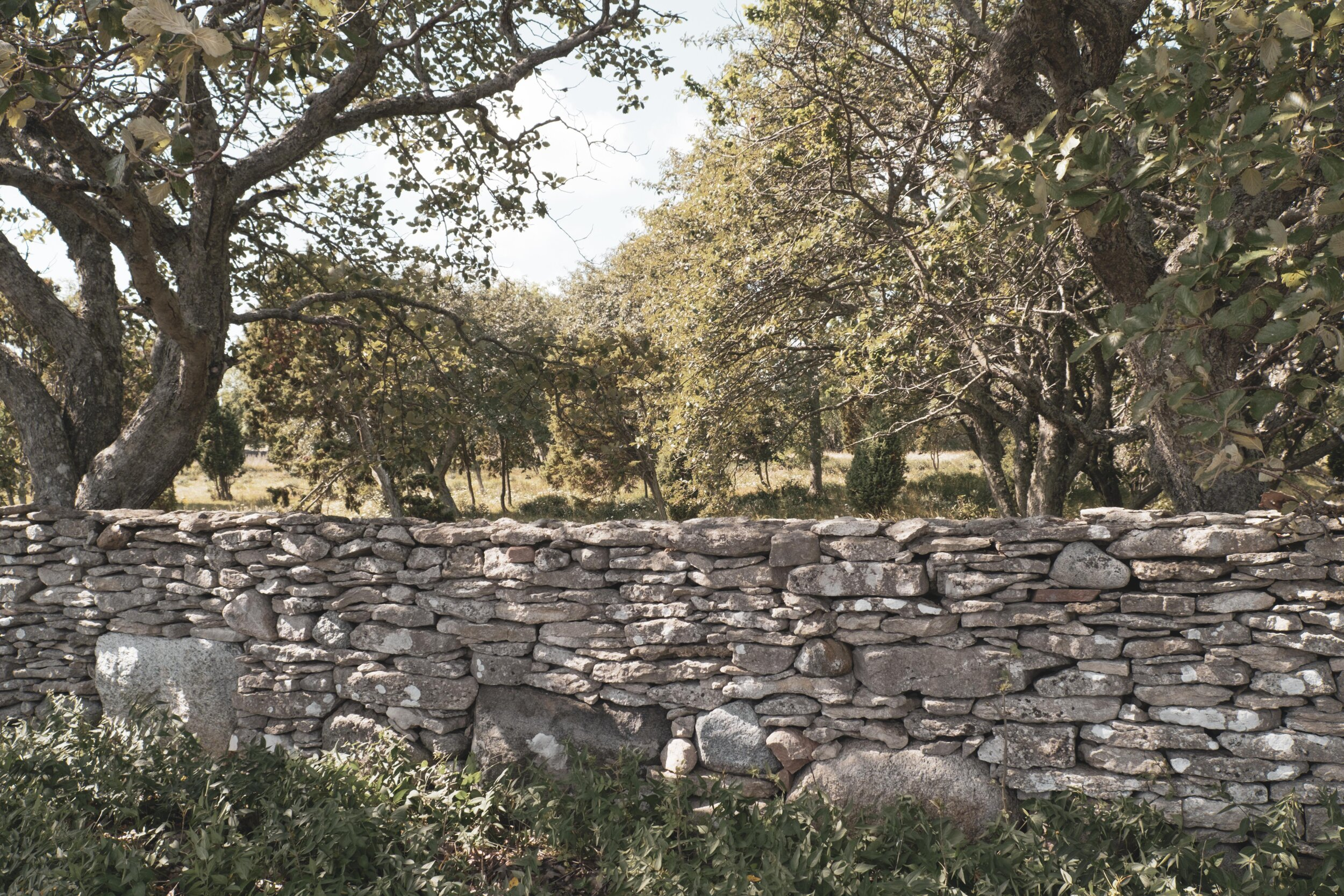 One Fårö-classic is these fences made out of piles of stone. Originally they were made to keep in the sheep but now they also serve as protection against the wind.
