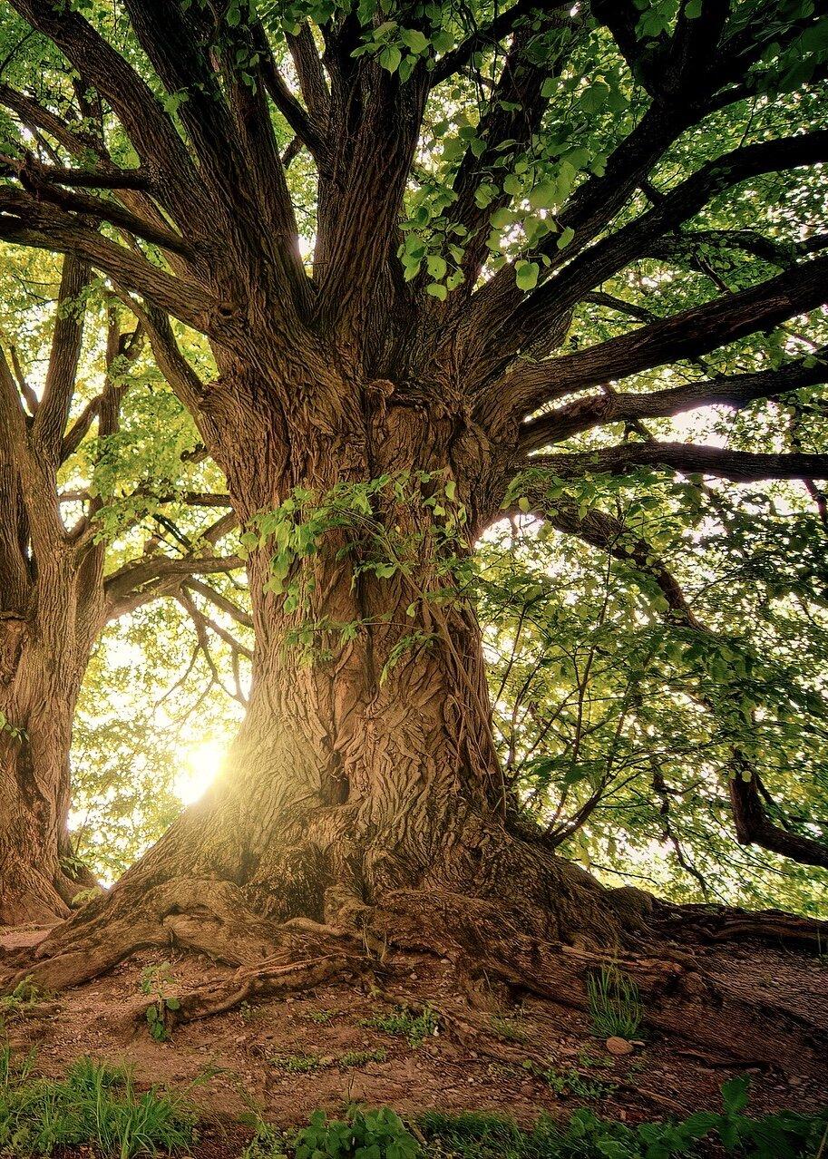 rooting meditation