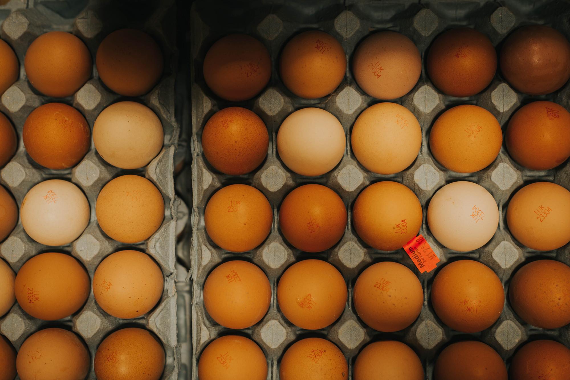 eggs_2019.jpg