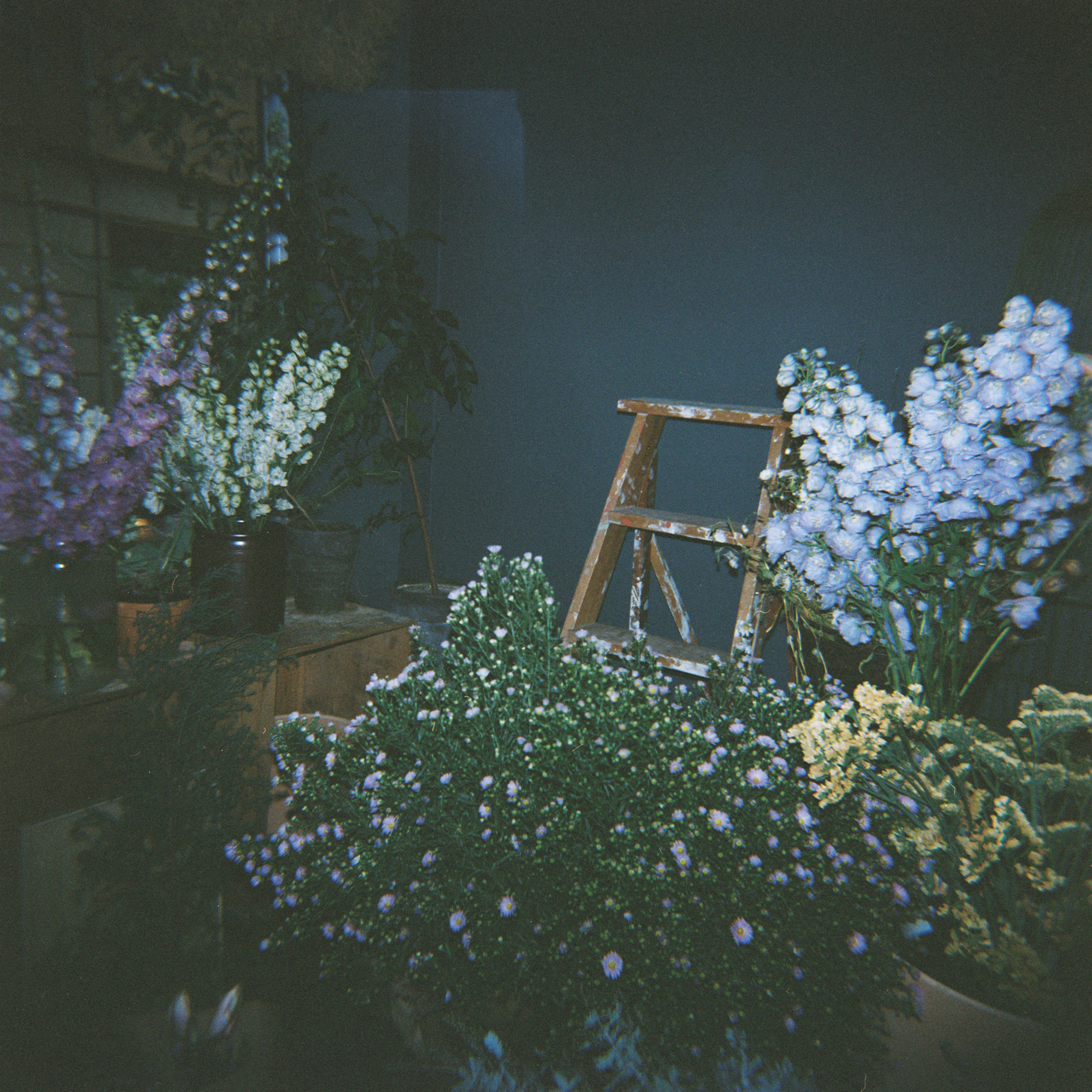Florista Malmö